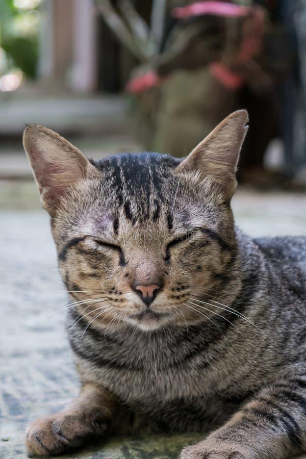 De gestreepte katkat sluit het de ogen van ` s royalty-vrije stock afbeelding