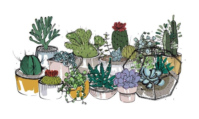 De getrokken inzameling van hand succulents, cactussen en andere woestijn plant het groeien in potten en glasvivaria Natuurlijk h vector illustratie