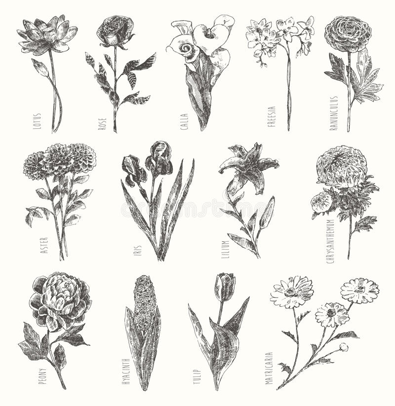 De in getrokken inzamelingshand bloeit bloemenreeks royalty-vrije illustratie