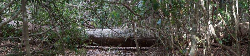 De gevallen boom is bushland stock afbeelding