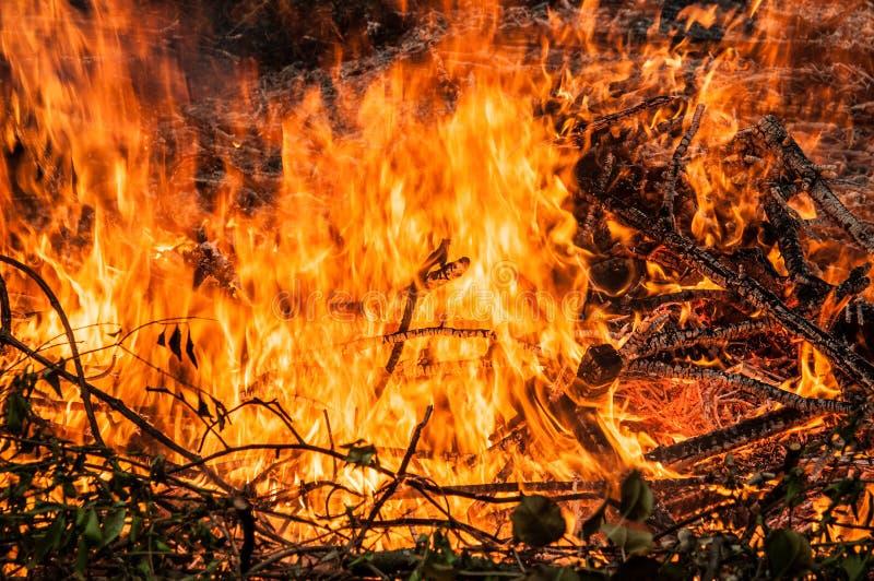 de gevallen boom wordt gebrand aan de grond heel wat rook wanneer vildfire royalty-vrije stock afbeelding