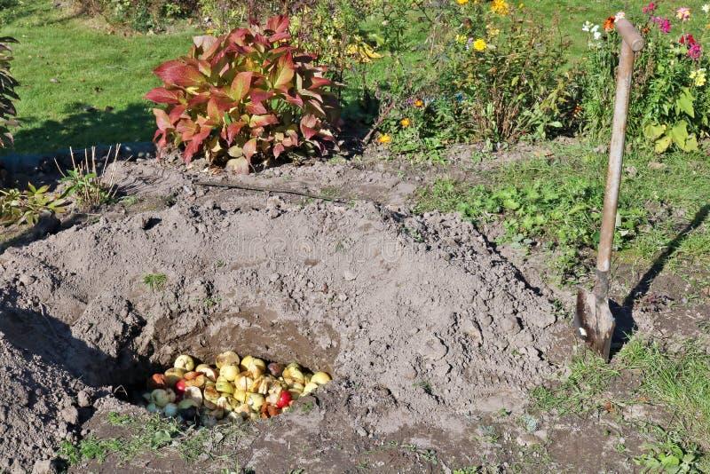 De gevallen rotte en slechte appelentuinlieden begraven in diepe gaten stock foto's