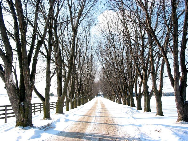 De gevoerde steeg van de winter boom stock afbeelding