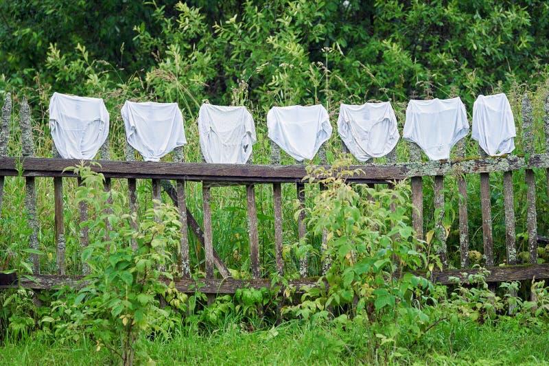 Vrouwelijke Onderbroek Stock Foto Image Of Meisje Naughty 66337140
