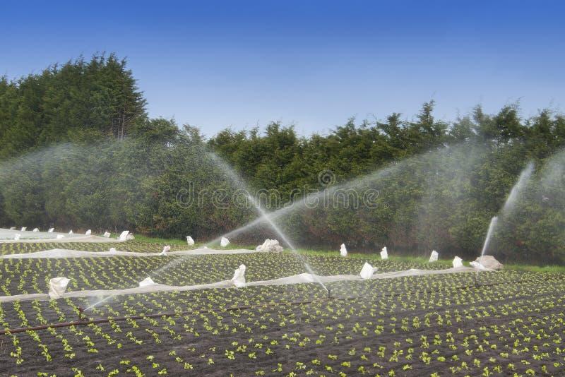 De gewassenirrigatie van het water royalty-vrije stock afbeeldingen