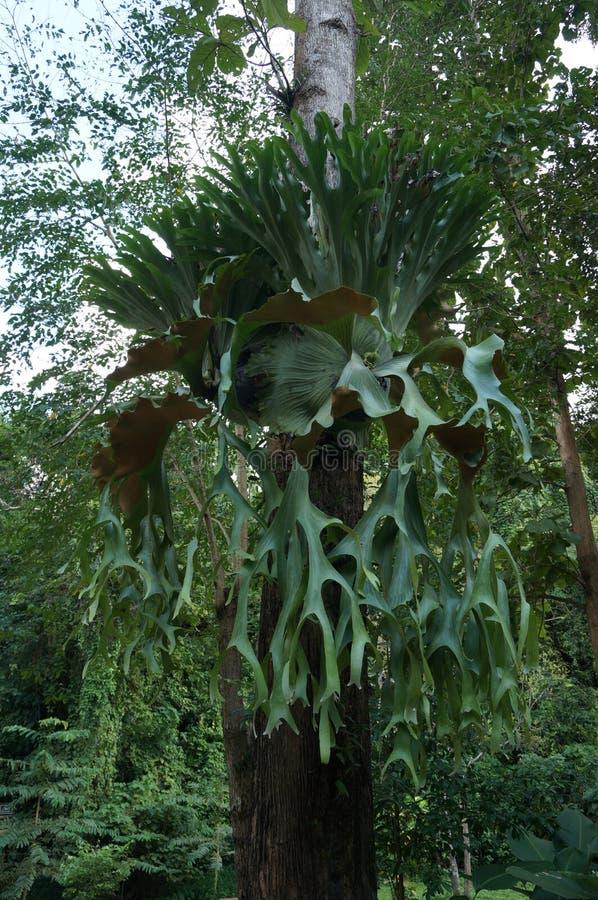 De gezonde boom van de parasietinstallatie stock foto's