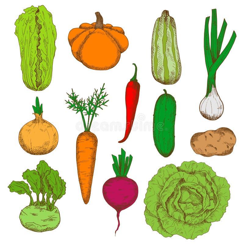 De gezonde verse geoogste pictogrammen van de groentenschets stock illustratie
