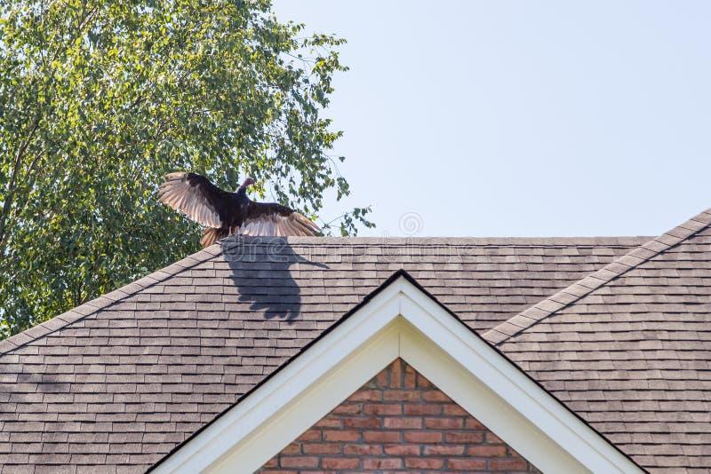 De gier of de Buizerd boven op Ingezeten Huis in Horaltic stelt royalty-vrije stock foto