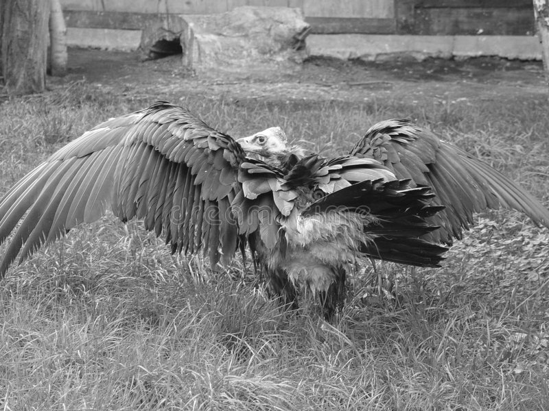 Download De gier van de monnik stock afbeelding. Afbeelding bestaande uit slecht - 32055