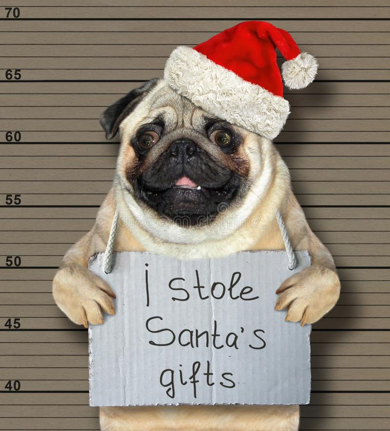 De giften van slechte hondstole santa stock fotografie