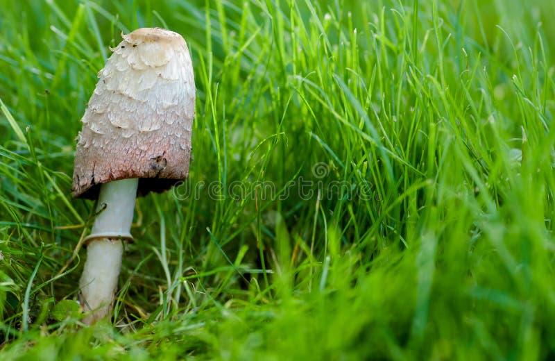 De giftige paddestoellandschap van Shaggy Ink GLB royalty-vrije stock foto