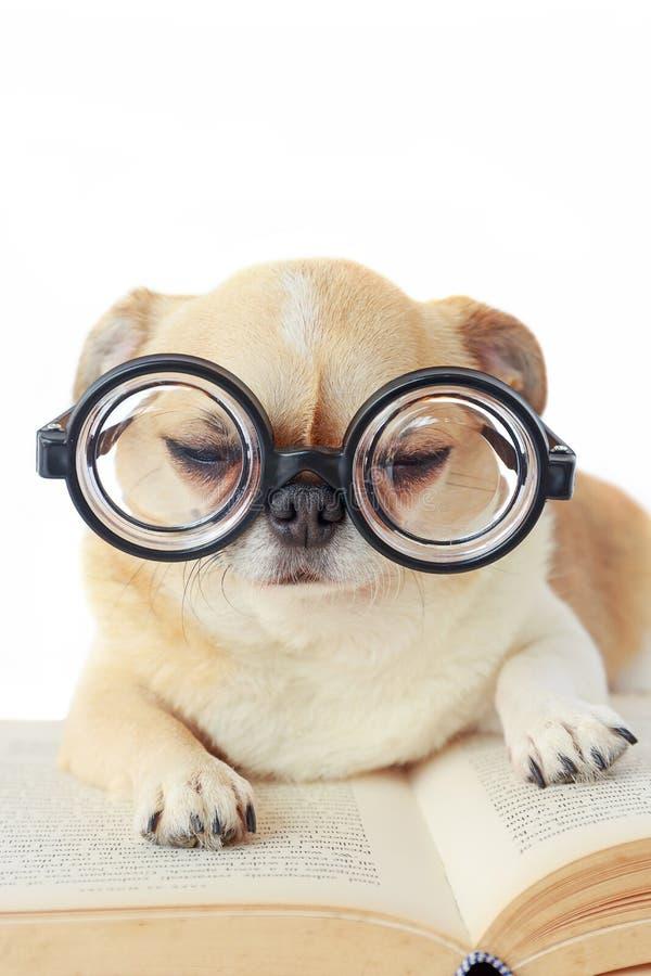 De glazen van de hondslijtage nerd royalty-vrije stock afbeeldingen
