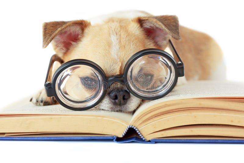 De glazen van de hondslijtage nerd stock fotografie
