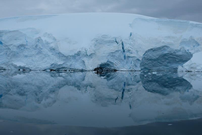 De gletsjers van Antarctica denken in spiegel blauwe baai na op bewolkte dag stock foto's