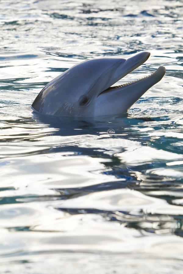 De Glimlach van de dolfijn royalty-vrije stock fotografie