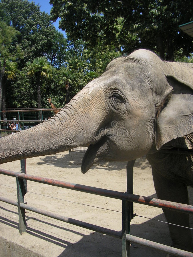 De glimlach van de olifant stock foto's