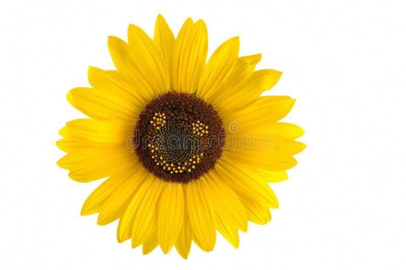 De glimlach van de zonnebloem stock afbeeldingen