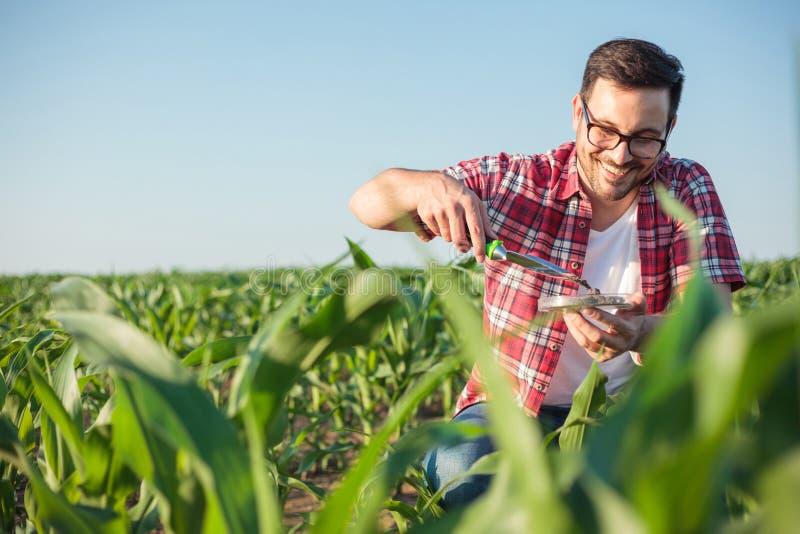 De glimlachende jonge agronoom of landbouwer die en grondsteekproeven op een graan nemen de analyseren bewerkt stock afbeelding