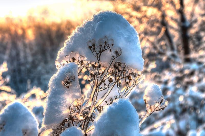 De gloed van de de winterszonsondergang stock foto