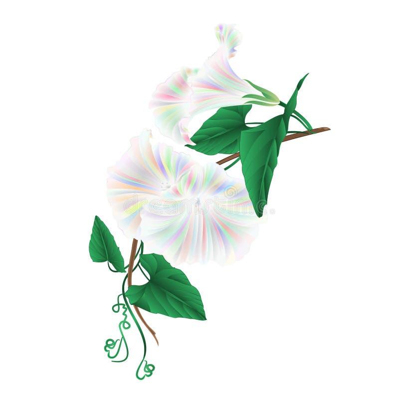 De glorie van de bloemochtend multi gekleurd op een witte uitstekende vector editable illustratie als achtergrond royalty-vrije illustratie