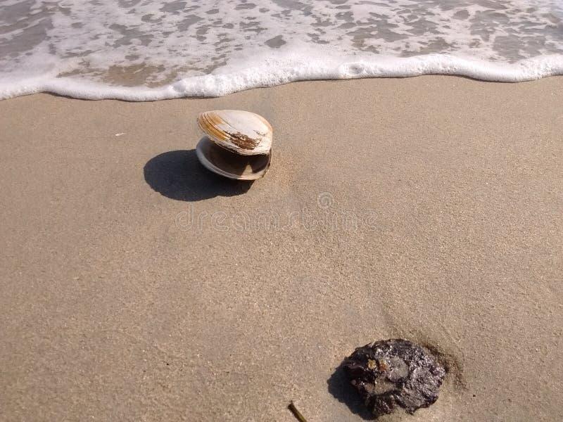 De golf en de rots van het tweekleppig schelpdierzand op strand royalty-vrije stock afbeelding