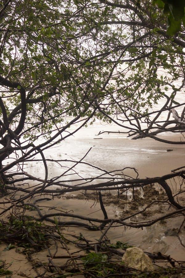 De golven bereiken at high tide de mangroven in Playa Langosta aangezien het Tropische Onweer Nate Costa Rica in Oktober 2017 ver royalty-vrije stock foto's