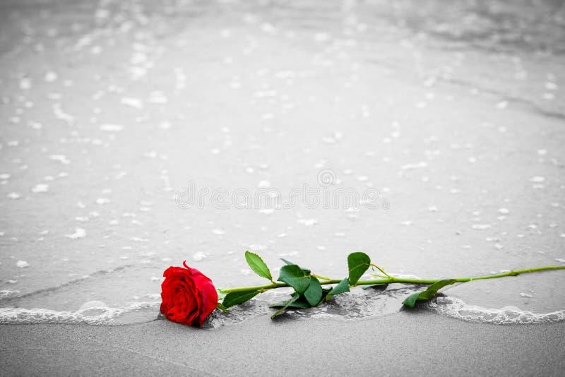 De golven die een rood reinigen namen van het strand toe Kleur tegen zwart-wit Liefde stock afbeelding
