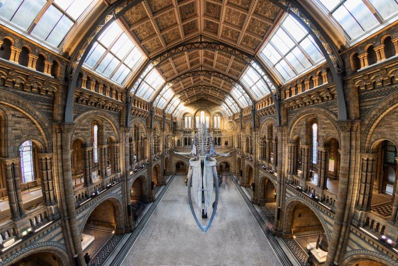 De gotische architectuur van het Biologiemuseum in Londen stock afbeeldingen