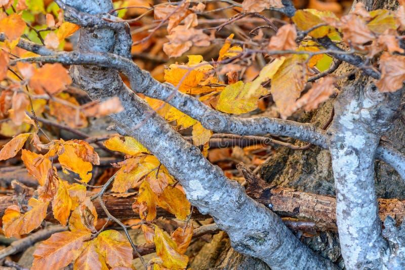 De gouden gele bladeren met takken in de bosherfst gaat fram weg royalty-vrije stock foto
