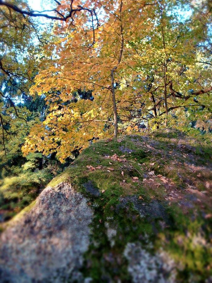 De gouden Herfst Bezinning van de hemel in water Kleurrijke de herfst bosrel van kleuren De Indische zomer Autumn Landscape royalty-vrije stock foto's