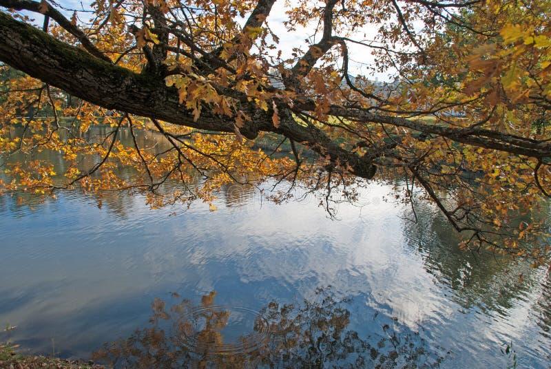 De gouden herfst; bomen dichtbij vijver stock afbeelding