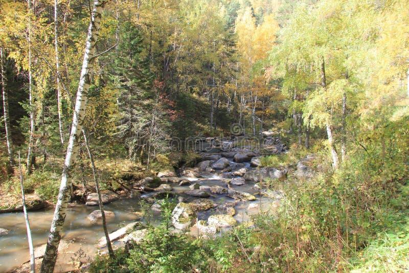 De gouden herfst in het Altai-gebied in Rusland Mooi landschap - weg in de herfstbos royalty-vrije stock afbeeldingen