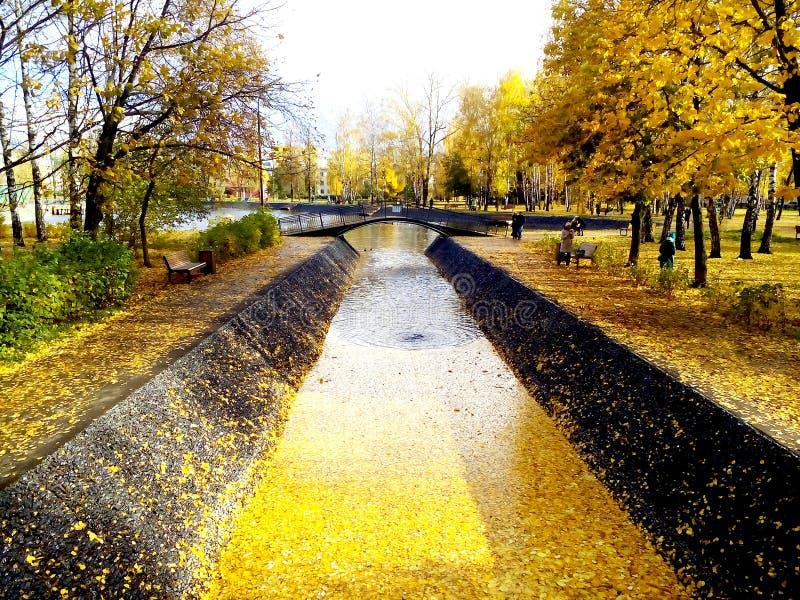 De gouden herfst in het park royalty-vrije stock fotografie