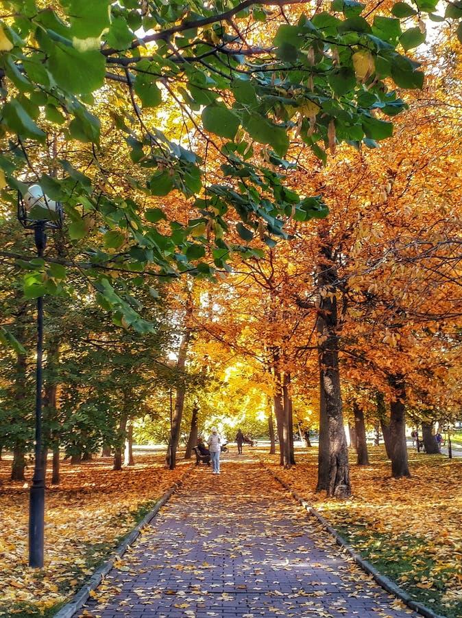 De gouden herfst in het park royalty-vrije stock foto's