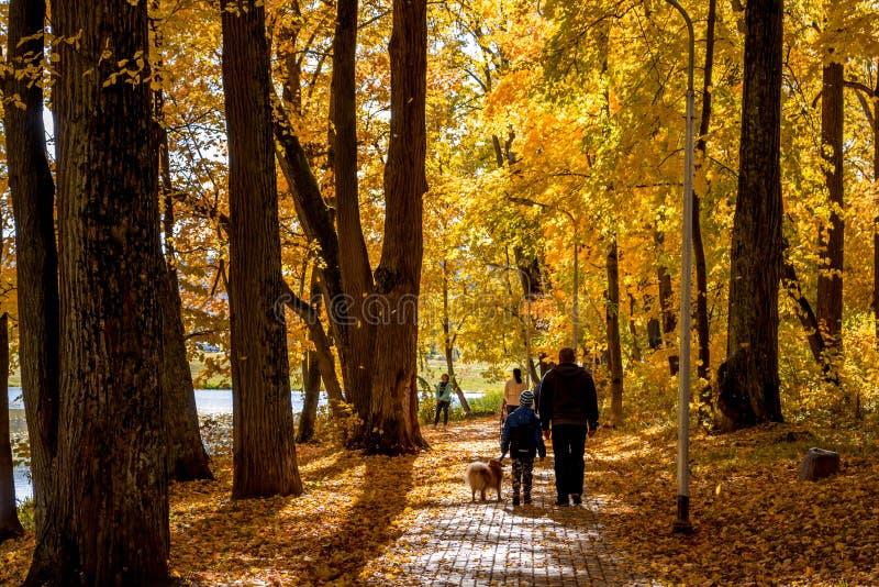 De gouden herfst in het park stock fotografie