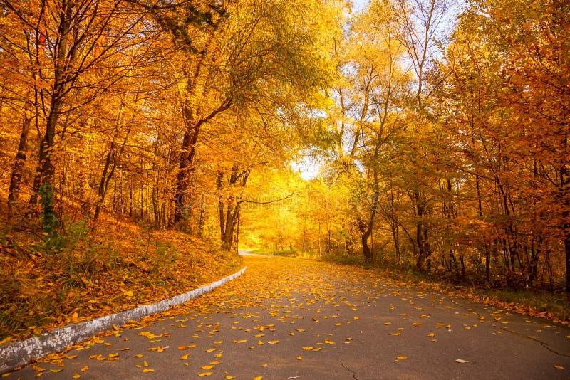 De gouden Herfst in het stadspark - Gele Bomen en steeg stock foto's
