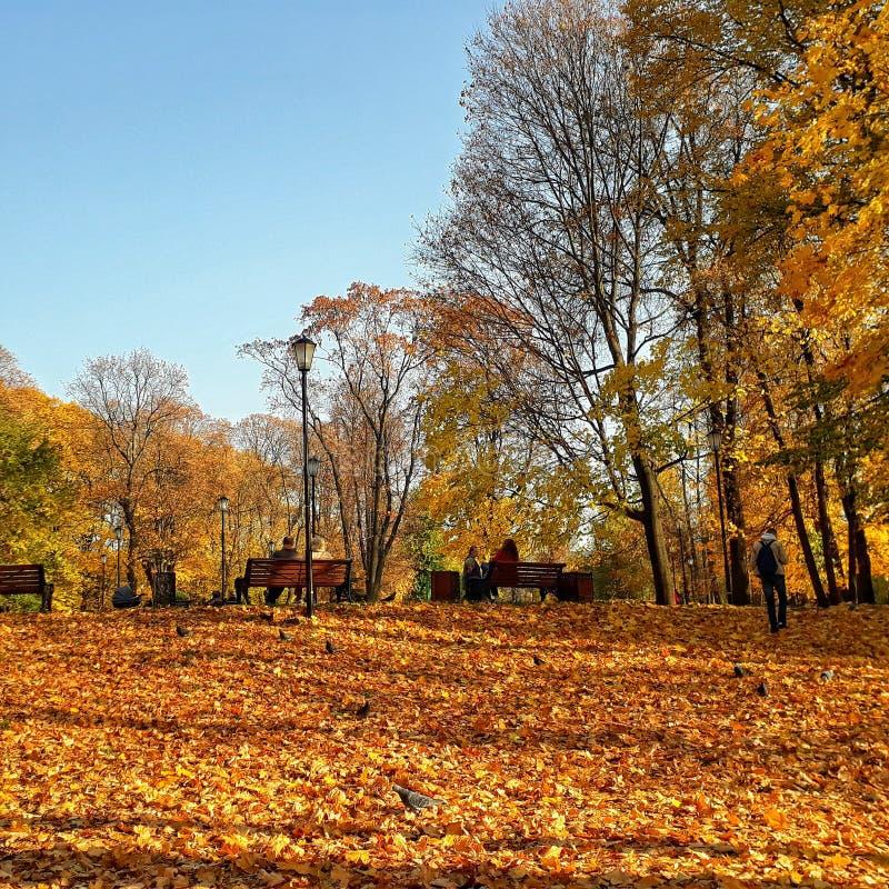 De gouden Herfst in Lefortovo-park royalty-vrije stock foto's