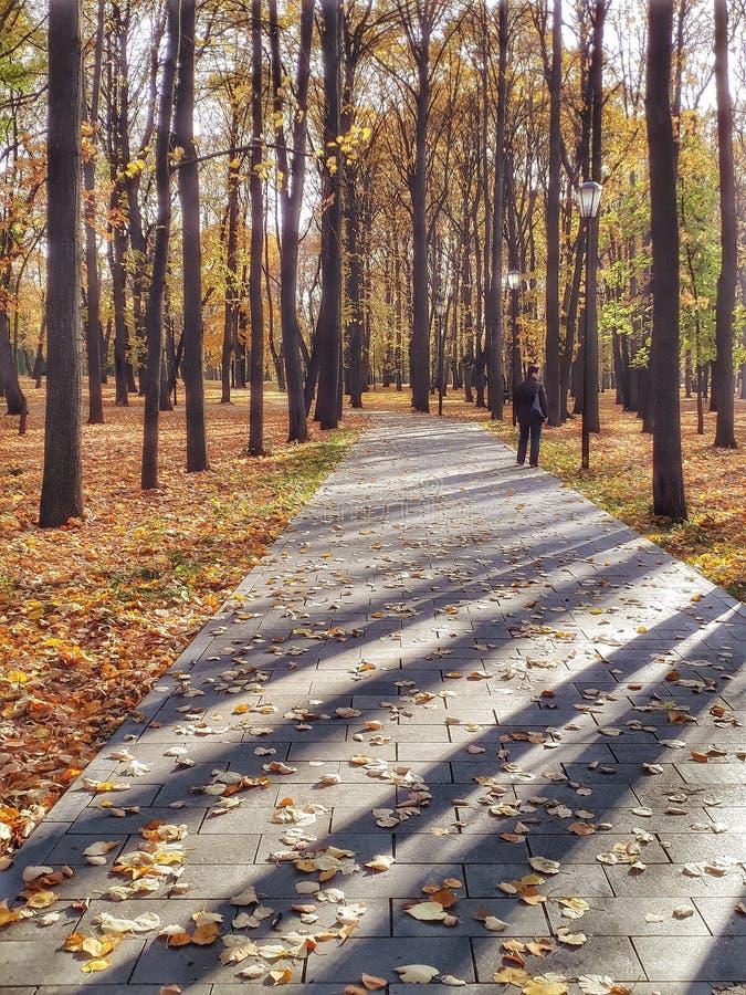 De gouden Herfst in Lefortovo-park royalty-vrije stock fotografie