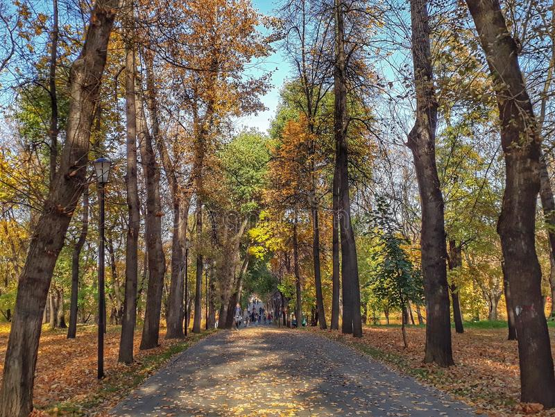 De gouden Herfst in Lefortovo-park stock afbeelding