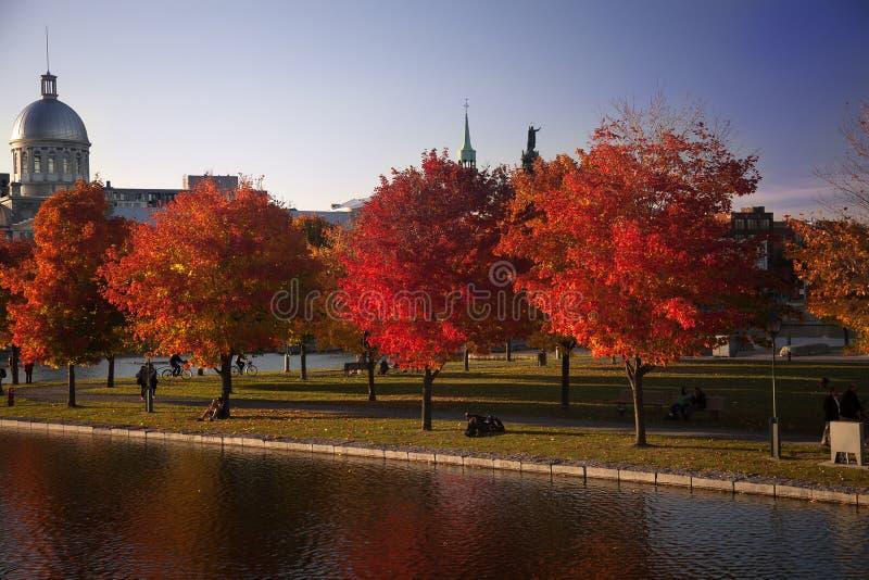 De gouden herfst in Montreal stock afbeeldingen