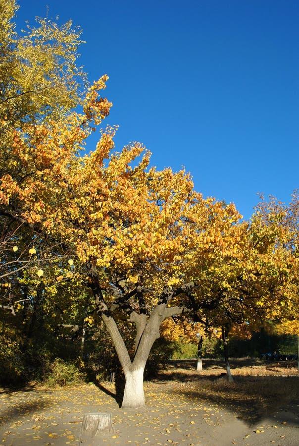 De gouden herfst tegen de hemel stock foto