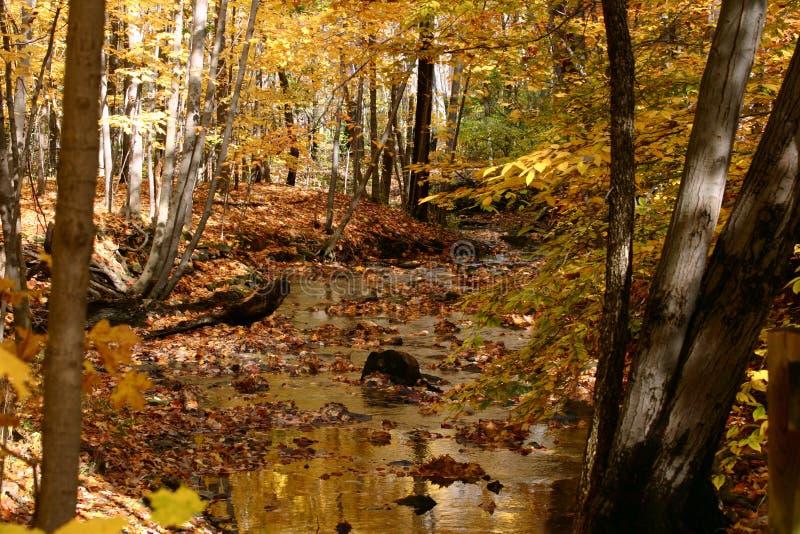 De gouden Stroom van de Herfst royalty-vrije stock fotografie