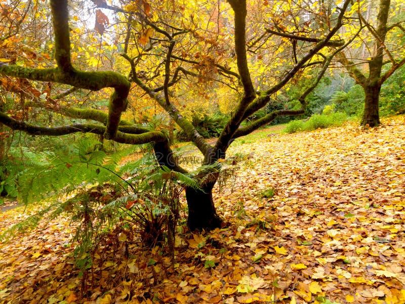 De gouden tuin van de Herfst stock afbeeldingen