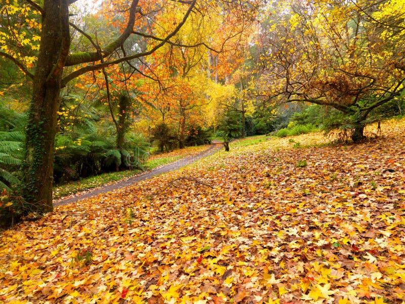 De gouden tuin van de Herfst royalty-vrije stock fotografie