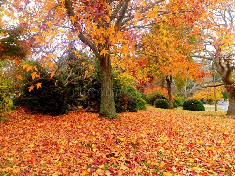 De gouden tuin van de Herfst stock afbeelding