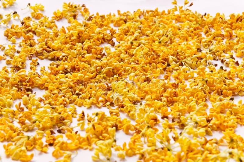 De gouden zoete osmanthusbloemblaadjes stock afbeelding