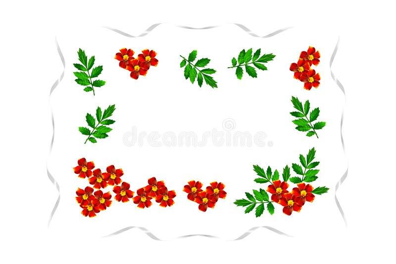 De goudsbloemen van de herfstbloemen vector illustratie