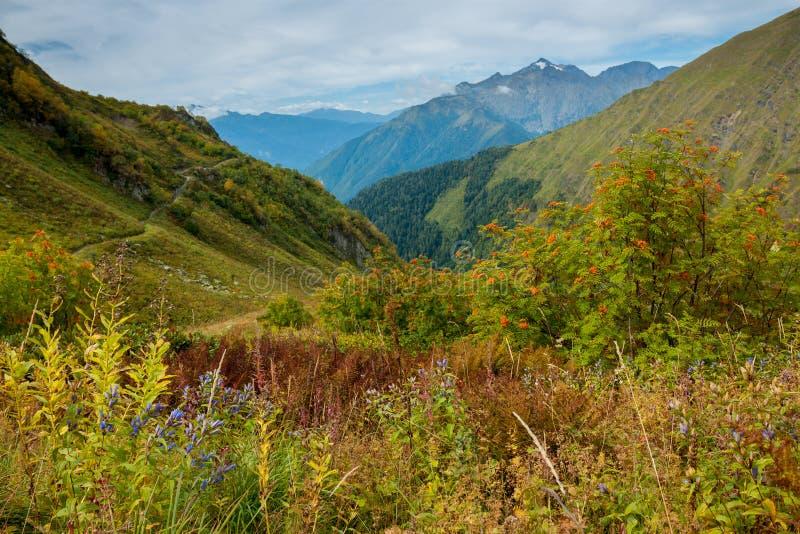 De gröna bergen av det norr Kaukasuset fotografering för bildbyråer