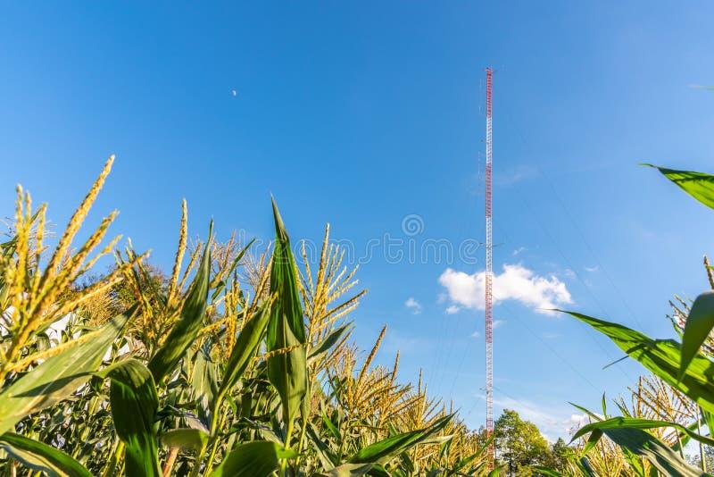 De graanbomen op organisch graangebied met mededeling zenden toren in duidelijke blauwe hemel via de radio uit royalty-vrije stock afbeeldingen