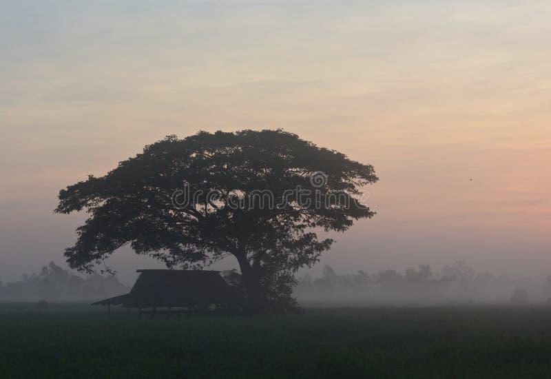 De grands arbres et des cabanes de fermiers le matin par jour de brouillard images libres de droits